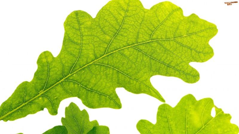 Oak leaf 1920x1080